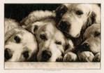 Portrait de labradors - Vervaco