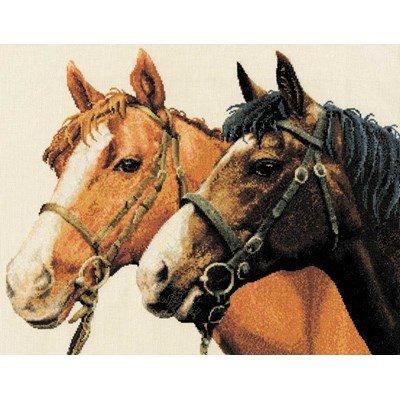 Kit DMC à broder au point croix chevaux complices