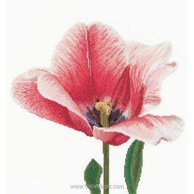 Point de croix de Thea Gouverneur à broder pink darwin hybrid tulip sur aida