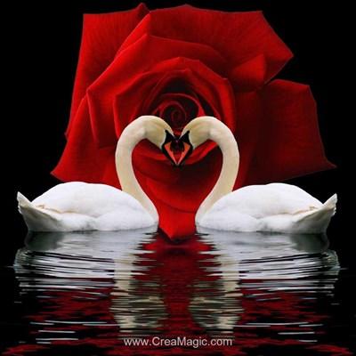 Broderie diamant swan devotion de Diamond Painting