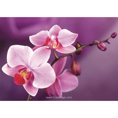 Broderie diamant branch of orchids - Wizardi