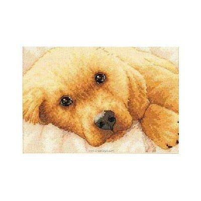 Kit broderie de Dimensions au point de croix golden puppy