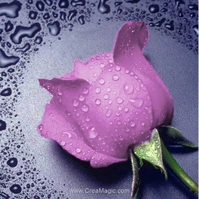 Broderie diamant pink rose - Diamond Painting