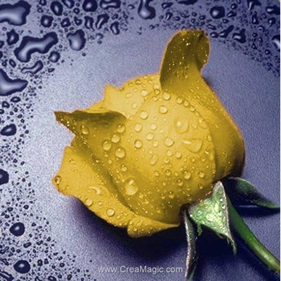 Broderie diamant yellow rose - Diamond Painting