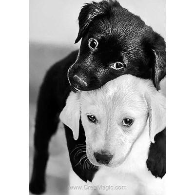 Kit broderie diamant Collection d'art labradors noir et blanc