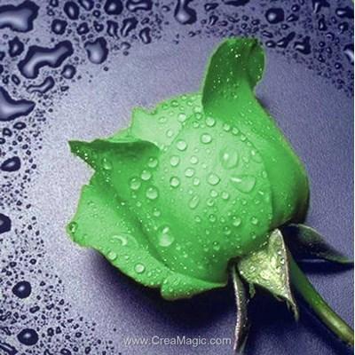 Broderie diamant Diamond Painting green rose
