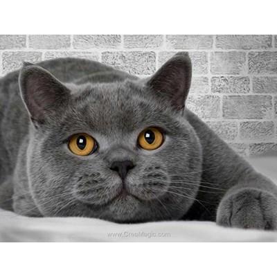 Broderie diamant chat britannique - Diamond Painting