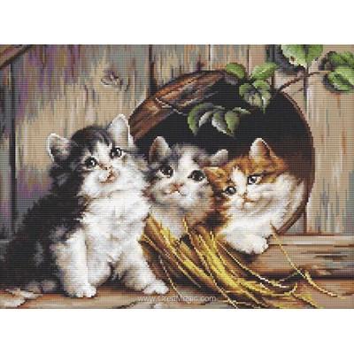 Broderie au point compté 3 chatons angora à l'abris - Luca-S