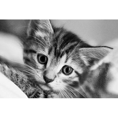 Kit broderie diamant black and white cat - Wizardi
