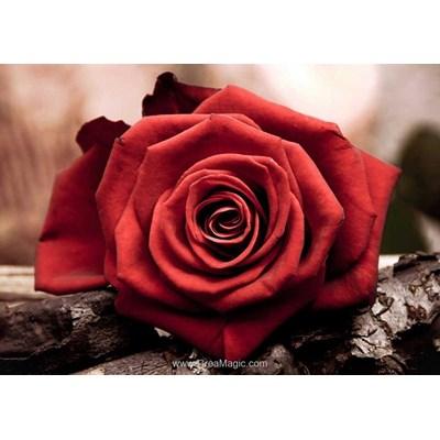 Broderie diamant rose rouge de Collection d'art
