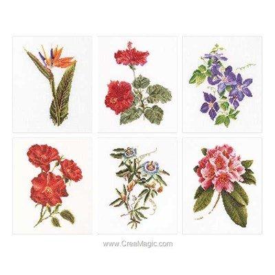Point de croix de Thea Gouverneur à broder six floral studies sur lin