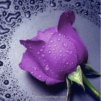 Kit broderie diamant lilac rose de Diamond Painting