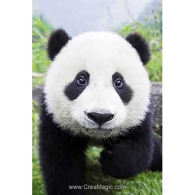 Kit broderie diamant curious panda de Wizardi