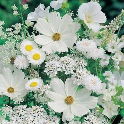 Kit broderie diamant white flowers de Diamond Painting