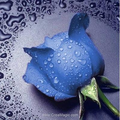 Kit broderie diamant Diamond Painting blue rose