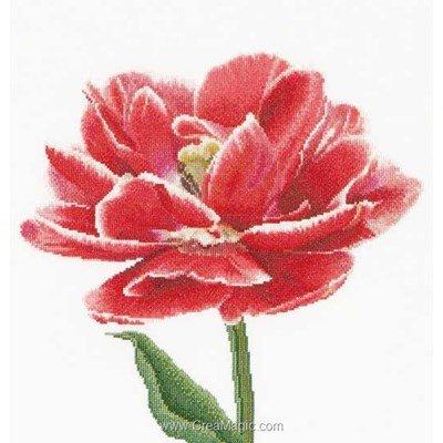Modèle broderie au point de croix Thea Gouverneur red/white edged early double tulip sur aida
