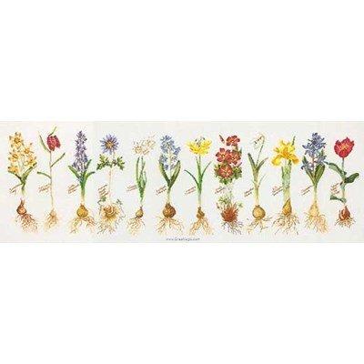 Kit Thea Gouverneur à broder les bulbes de fleurs sur lin