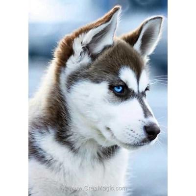 Kit broderie diamant snow dog de Wizardi