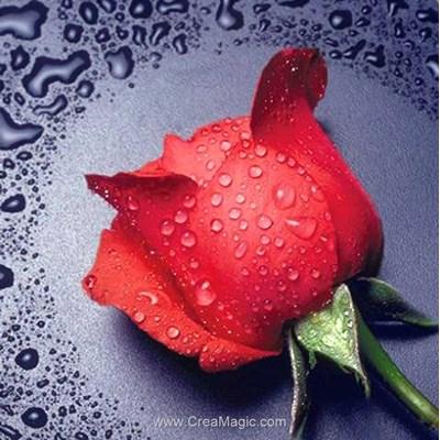 Kit broderie diamant red rose - Diamond Painting