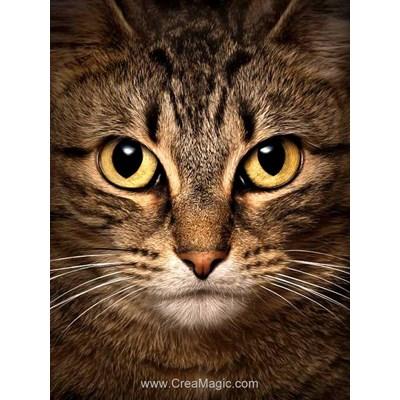 Broderie diamant Wizardi wise cat