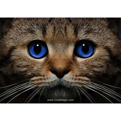Broderie diamant Collection d'art le chat aux yeux bleus