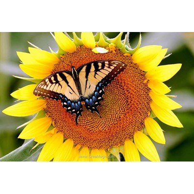 Kit broderie diamant butterfly on sunflower - Diamond Painting