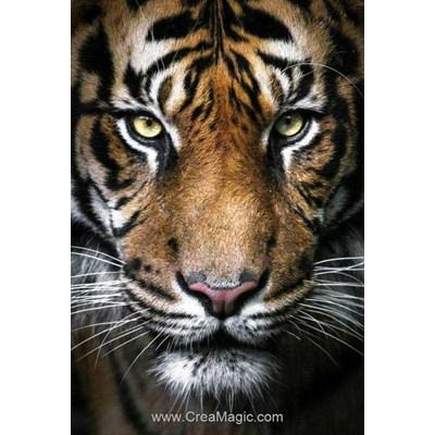 Broderie diamant Wizardi le regard du roi tigre