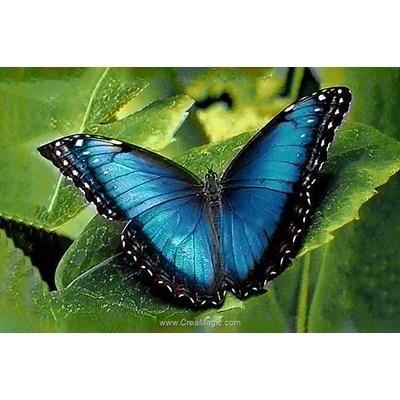 Broderie diamant blue morpho - Wizardi